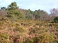 Colaton Raleigh Common - geograph.org.uk - 144394.jpg