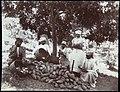 Collectie Nationaal Museum van Wereldculturen TM-60062259 Vrouwen oogsten cacaobonen uit de cacaovrucht Jamaica A. Duperly & Sons (Fotostudio).jpg