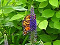 Colourful (9110119719).jpg
