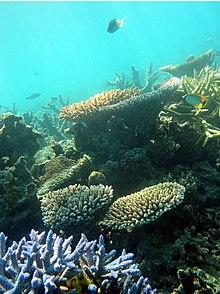 Sono visibili le biocostruzioni coralline che costituiscono lo scheletro della barriera corallina, attorno alle quali si sviluppano abbondanti forme di vita