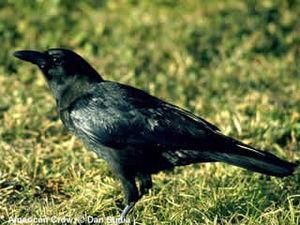 جميع أصوات الطيور والحيوانات لهواة