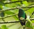 Costa Rica DSCN2133-new (31093406496).jpg