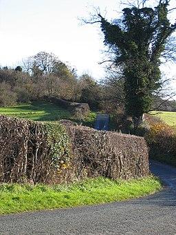 Country Lane near Bryn-yr-eithin - geograph.org.uk - 284786
