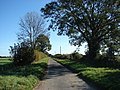 Country road near Little Palgrave Hall - geograph.org.uk - 589473.jpg