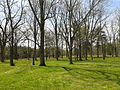 Cowpens National Battlefield - woods near the Robert Scruggs House.jpg