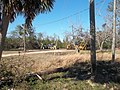 Cypress FL Norton House site03.jpg