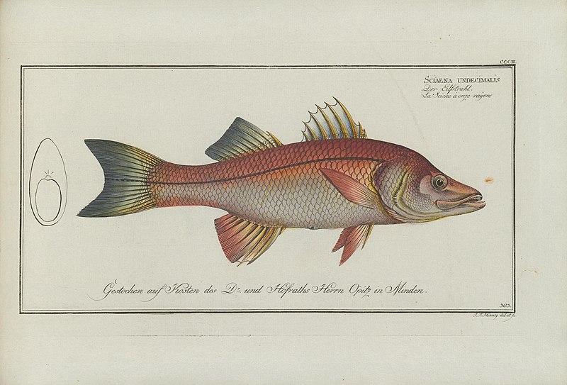 File:D. Marcus Elieser Bloch's, ausübenden Arztes zu Berlin ... Oeconomische Naturgeschichte der Fische Deutschlands (20867653542).jpg