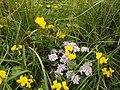 Dafne tra fiorellini gialli.jpg