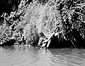 Decaying Dock, north bank of Buffalo Bayou, Houston, Texas 1002101515BW (5066545154).jpg
