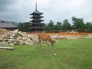 Deer near construction site in Nara