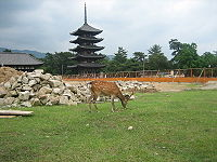Deer near construction site in Nara.jpg