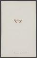 Deiopeia - Print - Iconographia Zoologica - Special Collections University of Amsterdam - UBAINV0274 003 05 0003.tif