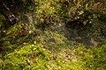Desert stream (13496486255).jpg