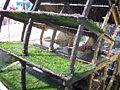 Detail Wasserrad in L'Isle-sur-la-Sorgue 10.06.2007.JPG