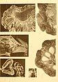 Deutsche Südpolar-Expedition, 1901-1903, im Auftrage des Reichsamtes des Innern (1913) (20862177076).jpg