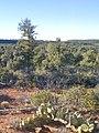 Devil's Bridge Trail, Sedona, Arizona - panoramio (11).jpg
