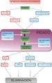 Diagrama metabolismo hepático gl.png