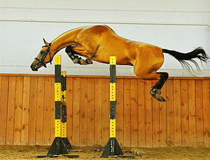 Jumping (horse) - A horse free jumping