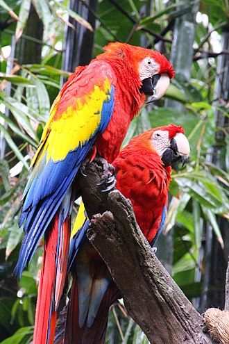 Disney's Animal Kingdom - Scarlet macaws at Discovery Island