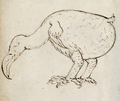 Dodo - 1 From the Journal of the Gelderland 1601.png