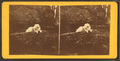 Dog resting on a rocks, from Robert N. Dennis collection of stereoscopic views.png
