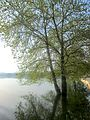 Dojran Lake 153.jpg