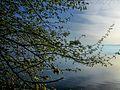 Dojran Lake 172.jpg
