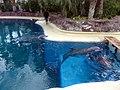 Dolphins (7980982650).jpg