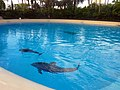 Dolphins (7981075407).jpg