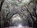 Driveway of wormsloe plantation.JPG