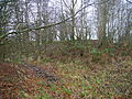 Druid's Grove Kilwinning.JPG