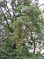 Drvece u parku (12).jpg
