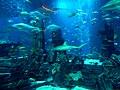 Dubai - Atlantis, The Palm – Atlantis, the submerged continent - اتلانتيس، القارة الغارقة فندق اتلانتس ذا بالم - panoramio.jpg