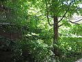 ESF-Forest-Restoration-Corner-2014.jpg