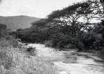 ETH-BIB-Bachvegetation am Makungu-River-Kilimanjaroflug 1929-30-LBS MH02-07-0455.tif