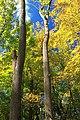 Early Autumn (4) (21952749425).jpg
