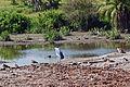 Eastern Serengeti 2012 06 01 3294 (7522729416).jpg