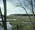 Eastern Shore of Virginia National Wildlife Refuge (4752172352).jpg