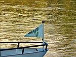 Elbe Ferry Pirna - Heidenau 124423979.jpg