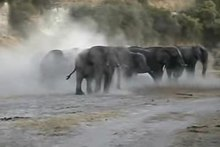 Bestand:Elephant Mud Bath.ogv