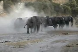 Fichier:Elephant Mud Bath.ogv