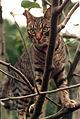 Elise's cat.jpg