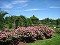 Elizabeth Park, Hartford, CT - rose garden 2.jpg