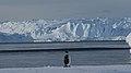 Empereur et glacier de lAstrolabe.jpg