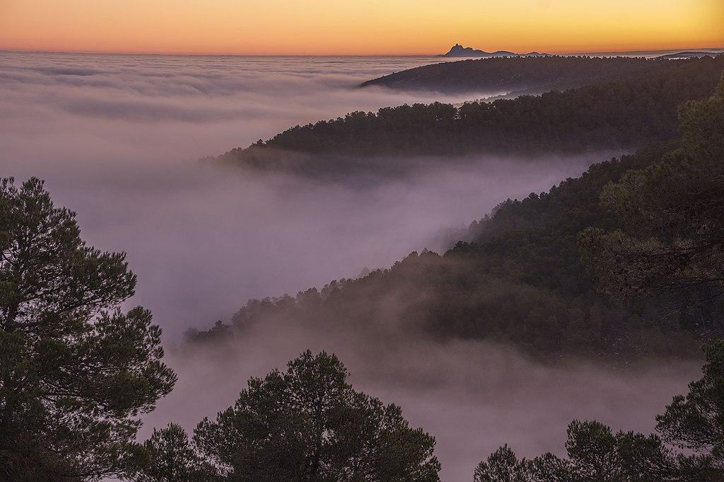 Empezando el año con nieblas