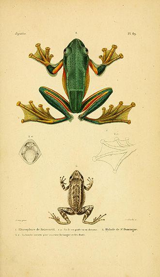 Gabriel Bibron - Plate 89 from Erpétologie Générale