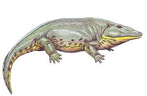 Eryopidae - Life restoration of Eryops megacephalus