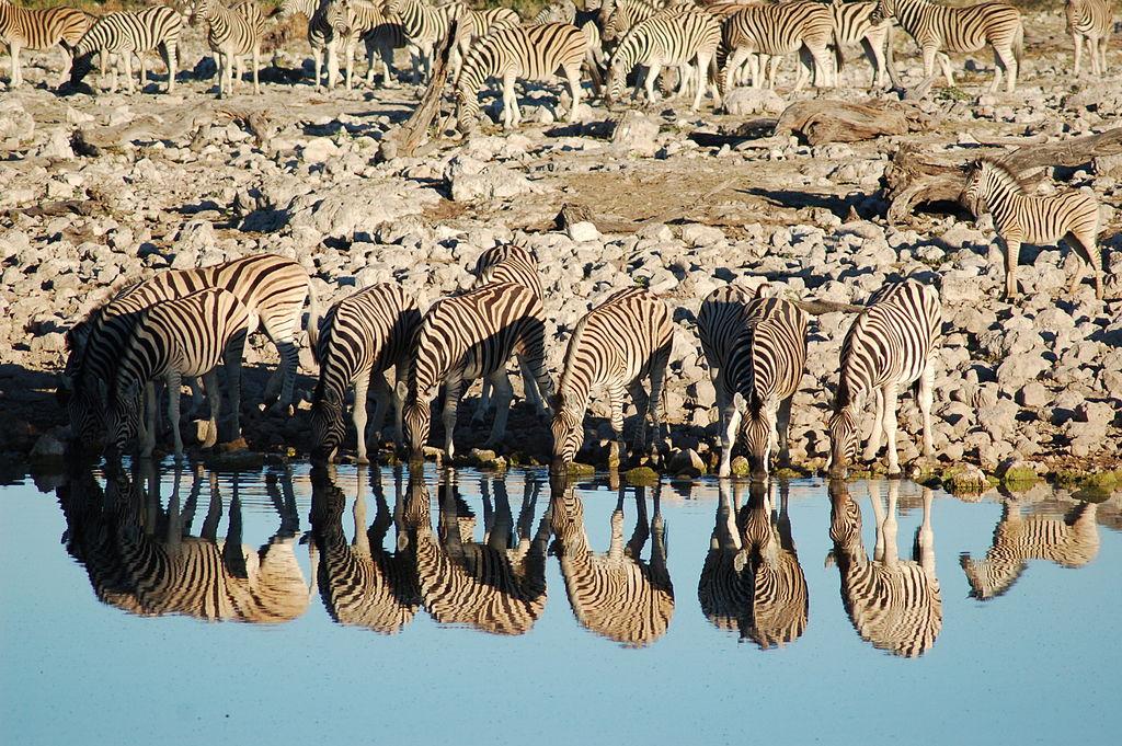 Etosha National Park, Namibia (3025798870)