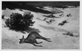 Exhausted doe in the snow (Jura) by Courbet 1857 pc.png