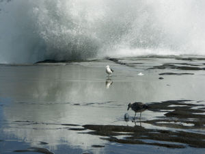 Seagulls on a rock ledge with wave breaking above them